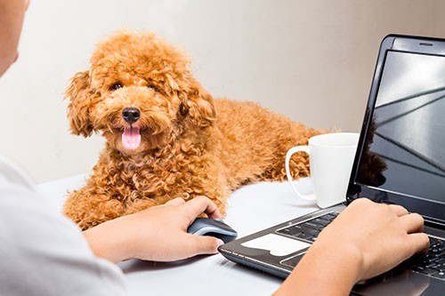 Office Friendly Pooches National Pet Day